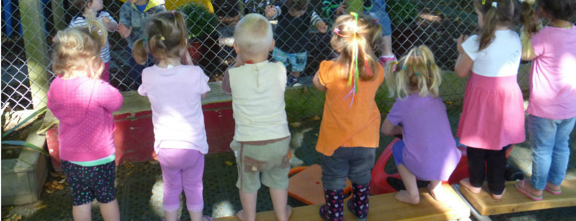 Toddlers Web 8.jpg - The Cambridge Early Learning Centre, childcare, ECE, and daycare located in Cambridge, Waikato, NZ